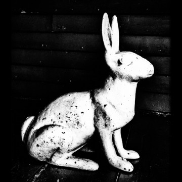 Hare I (or Rabbit, Rabbit): It's time for a fresh start!