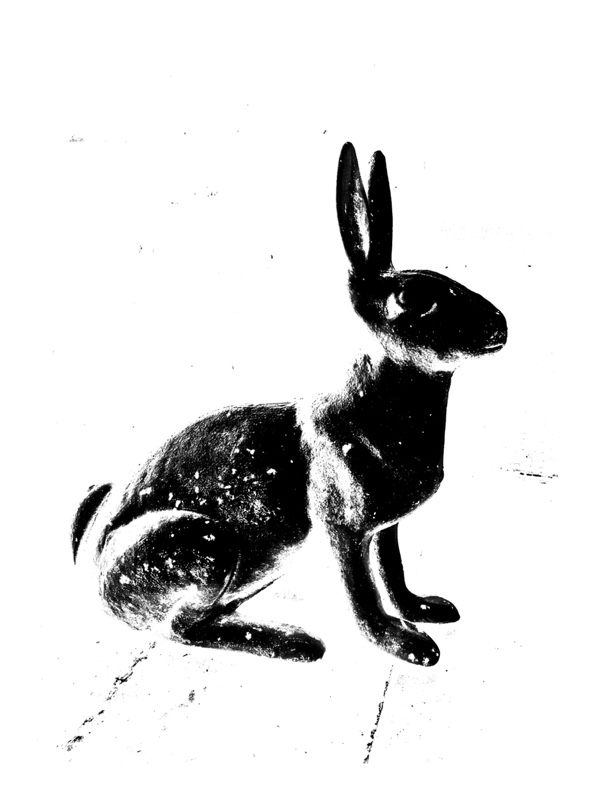 Hare II (or Rabbit, Rabbit): It's time for a fresh start!